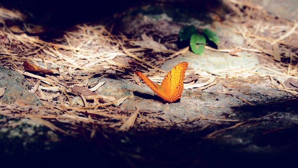 Butterfly gardens will continue to be popular next year. Photo: GMG