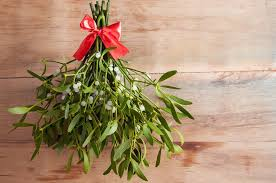 landscape plants for the holidays